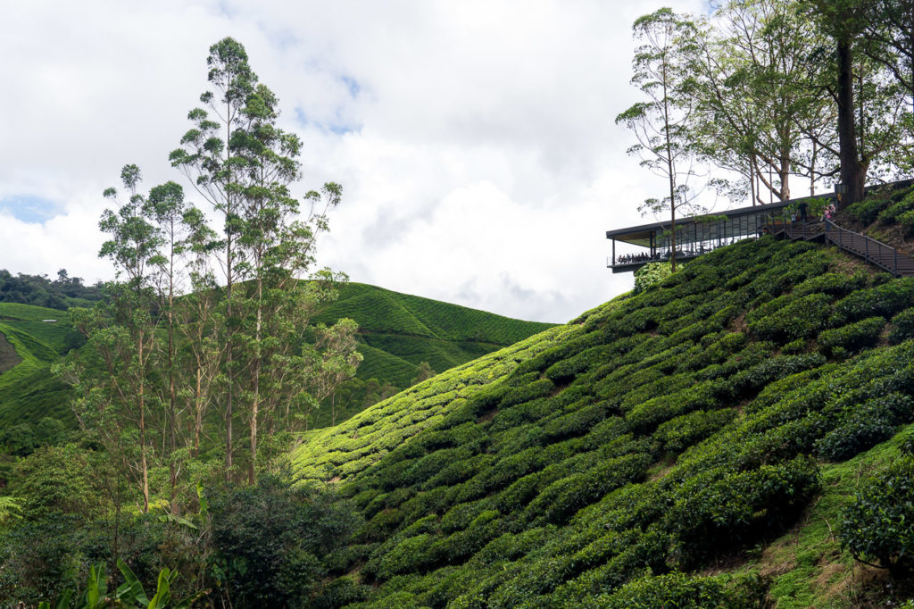 Sungai Palas BOH Tea Centre