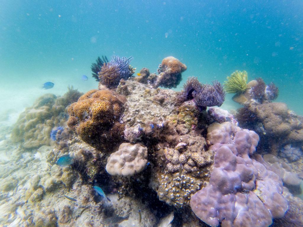 Coral reef, Ko Yang East