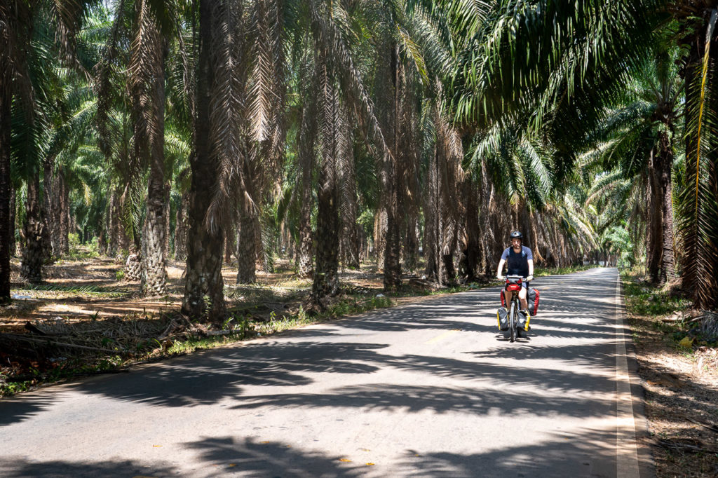 Armand in a palm oil plantation, Sai Thai