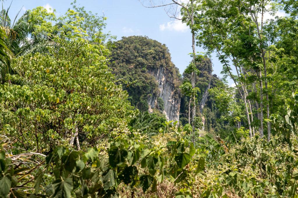 Sai Thai