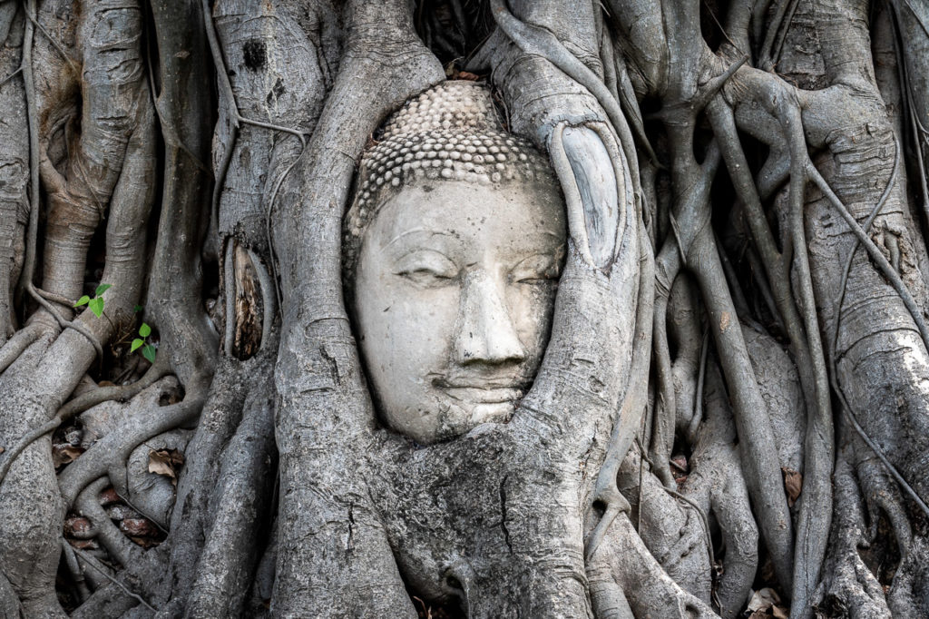Sandstone Buddha head tangled in a bodhi fig tree, Wat Mahathat, Ayutthaya Historical Park