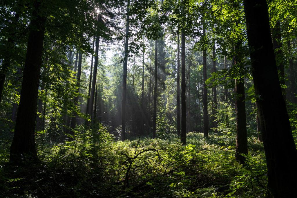 Buchenwälder im Rosengarten