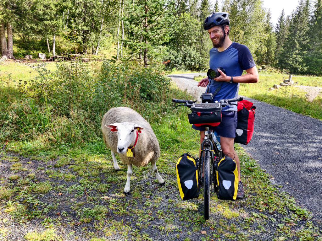 Armand and a sheep at Krokskogen