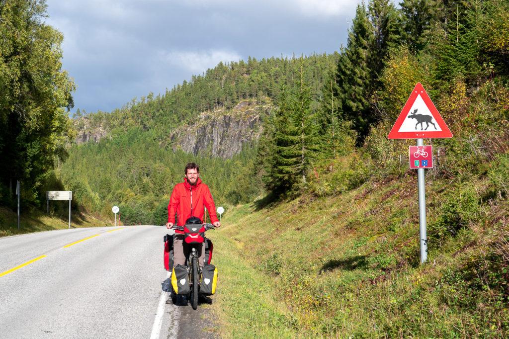 Armand, moose crossing road warning sign, Nasjonal sykkelrute nr. 1 signpost & EuroVelo 1 signpost on Fylkesvei 17 nearby Leirvik