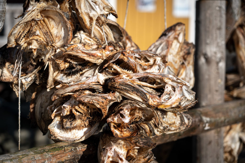 Stockfish at Nusfjord